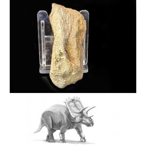 Bot Oogkas Triceratops